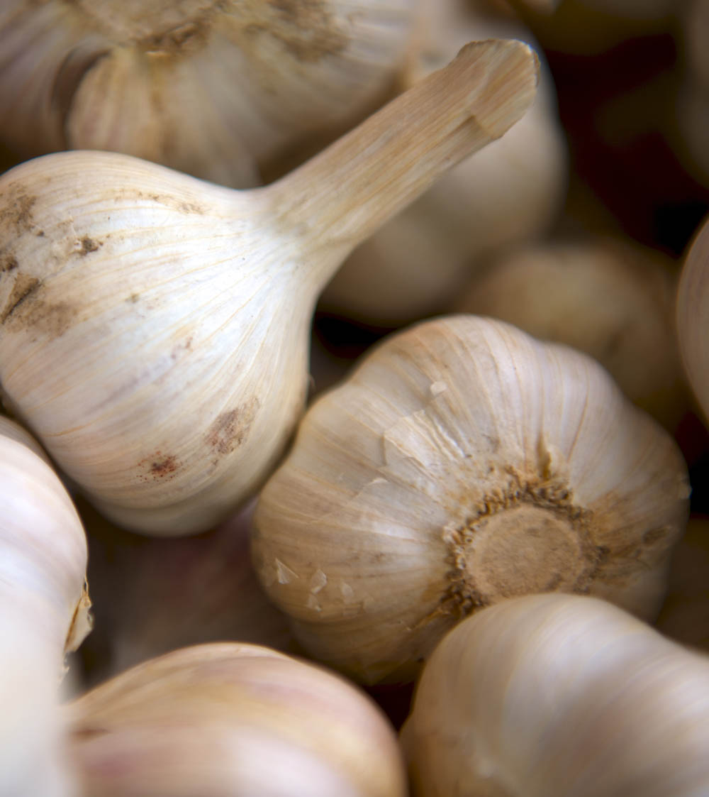 This is a caption about garlic. Hooray for garlic! Just make sure you brush your teeth after...
